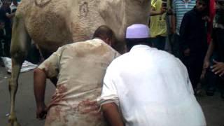 getlinkyoutube.com-camel qurbani in gulshan e iqbal (friends garden)