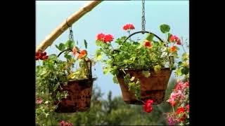 1988 - fontane fiorite