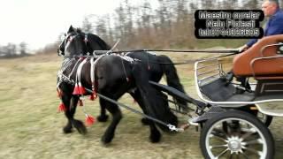 getlinkyoutube.com-Hamuri Nelu Ploiesti tel: 0744326605