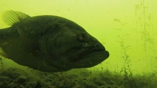 Underwater Bass Bed fishing Footage With Sight Fishing Tips!