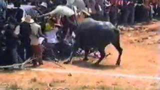 getlinkyoutube.com-Nature fights back: Water buffalo attacks crowd in Thailand event
