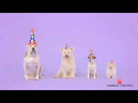 Woofy Birthday - Cute Dogs Bark Happy Birthday