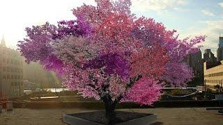 getlinkyoutube.com-Syracuse professor grows 40 different fruits on one tree