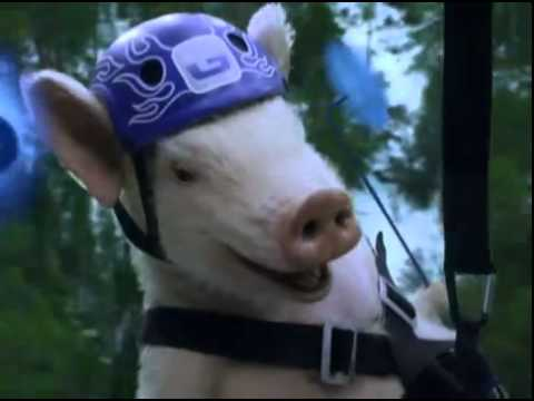 Maxwell the Pig Returns! Zip-line Piggy - New GEICO Commercial EPISODE 2