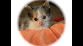 getlinkyoutube.com-Como hacer juguete para Gato