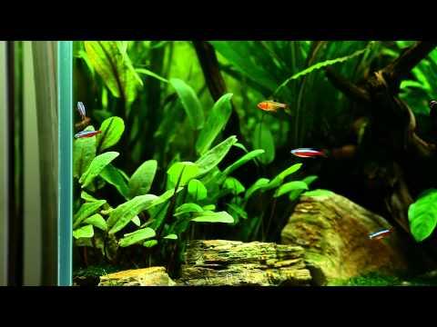 flow in the aquarium