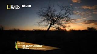 Ch 250 NGWHD - Jan highlight