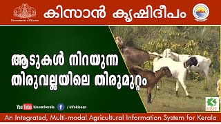 getlinkyoutube.com-Documentary on a successfully managed goat rearing unit in Thiruvalla, Pathanamthitta district