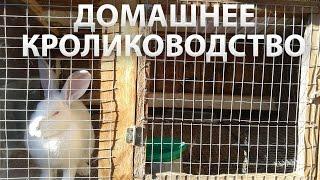 getlinkyoutube.com-Содержание и разведение кроликов в домашних условиях - видео советы.