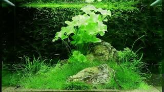 getlinkyoutube.com-Оформление аквариума на 100 литров от Tropica