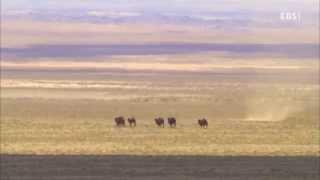 getlinkyoutube.com-EBS 다큐프라임 - 중앙아시아, 살아남은 야생의 기록 3부 바람의 이야기, 땅의 노래_#001