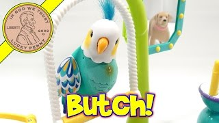 getlinkyoutube.com-Little Live Pets Cleverkeet, I Name Him Butch The Bird!