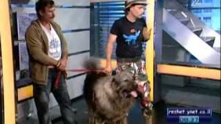 דוידי וחיות אחרות - כלבים