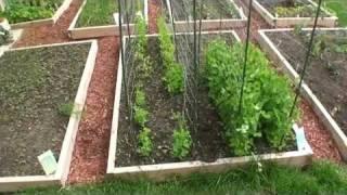 getlinkyoutube.com-GreenFun: Beginner Vegetable Gardener in Ottawa Canada and his Garden Part I