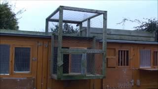 getlinkyoutube.com-Birmingham roller pigeon training new and young birds