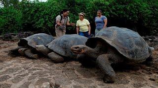 getlinkyoutube.com-10 Returning Extinct Animals That Are Still Alive