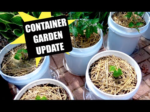Container Gardening May 2016 | Update
