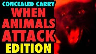 CCW: When ANIMALS ATTACK Edition!