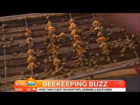 Urban BeeKeeping  For Beginners - Urban BeeKeeping Tips