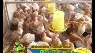 getlinkyoutube.com-เกษตรทำกิน ช่วงรวยด้วยมือ 20-01-56