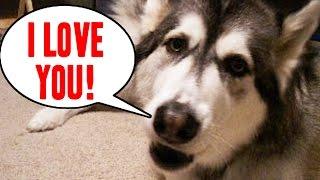 getlinkyoutube.com-24 Pets Who Can Talk Like Humans