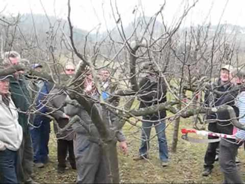 Obrezovanje sadnega drevja v Tunjicah