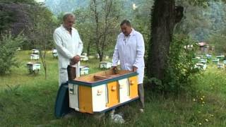 getlinkyoutube.com-Краснополянская опытная станция пчеловодства kosp-plem.ru