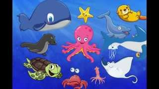 getlinkyoutube.com-The First Sea Animal Words for Toddlers Fun Show