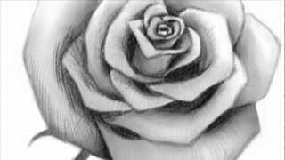 getlinkyoutube.com-How to Draw an Open Rose