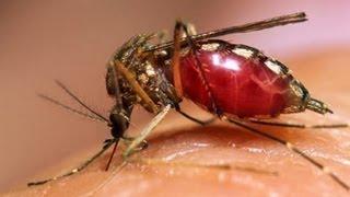 getlinkyoutube.com-Repelente natural de mosquitos.Organic repellent mosquito. EcoDaisy