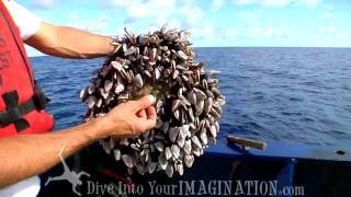 getlinkyoutube.com-Project Kaisei - Jim Leichter Finds Barnacle Fouling Community - The Garbage Patch - Scripps