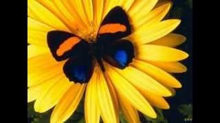 getlinkyoutube.com-วันจันทร์สีเหลือง สุขสันต์ สบายตา สบายใจ Yellow Monday Happy Clean and Clear.