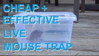 getlinkyoutube.com-Mouse trap 3.0