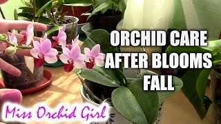 getlinkyoutube.com-How to care for orchids after blooms fall