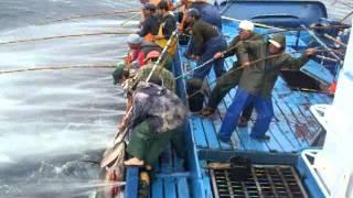 getlinkyoutube.com-Mal amanhado - Pesca do Atum 2011