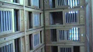 getlinkyoutube.com-Egay Yap Flyers Loft