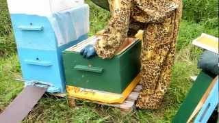 getlinkyoutube.com-Пчеловодство для начинающих видео. www.kupi-uley.ru