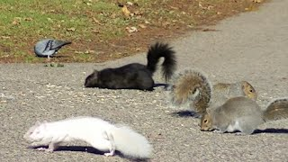 getlinkyoutube.com-MEOW! Video for Cats to Watch, Squirrels,Rabbits,Pigeons,Chipmunks,