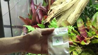 How to create a poison dart frog bioactive terrarium. Self cleaning, self maintaining