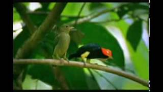 getlinkyoutube.com-L'Oiseau qui dansait le Moonwalk