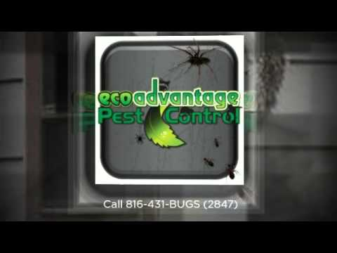 Kansas City Nuisance Wildlife Removal - Eco Advantage Pest