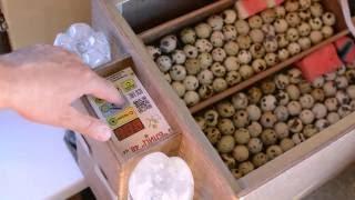 Инкубация перепелов: от закладки яйца до рождения птенца