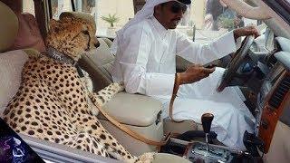 ये अजीब चीज़ें सिर्फ आपको दुबई में मिलेंगी || Weird Things you will only see in Dubai Hindi