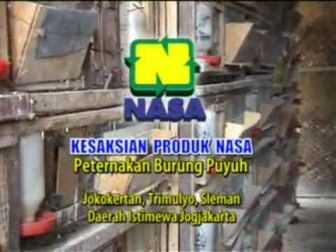 TERNAK BURUNG PUYUH YOGYAKARTA - RESEP MUDAH MENINGKATKAN MUTU & PRODUKSI TELUR PUYUH