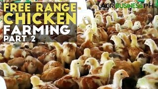 getlinkyoutube.com-Free Range Chicken Farming Part 2 : Free Range Chicken | Agribusiness Philippines