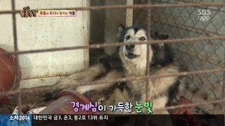 getlinkyoutube.com-[충격] 방치된 개들, 동족 육식 장면 포착 @TV동물농장 140223