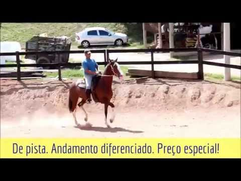Cavalo à venda - Premiada do EFI