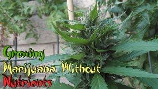 getlinkyoutube.com-Growing Marijuana Without Nutrients
