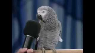 getlinkyoutube.com-ببغاء يقلد أصوات الحيوانات والطيور ويفهم كلام البشر