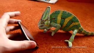 Chameleon was frightened by iphone
